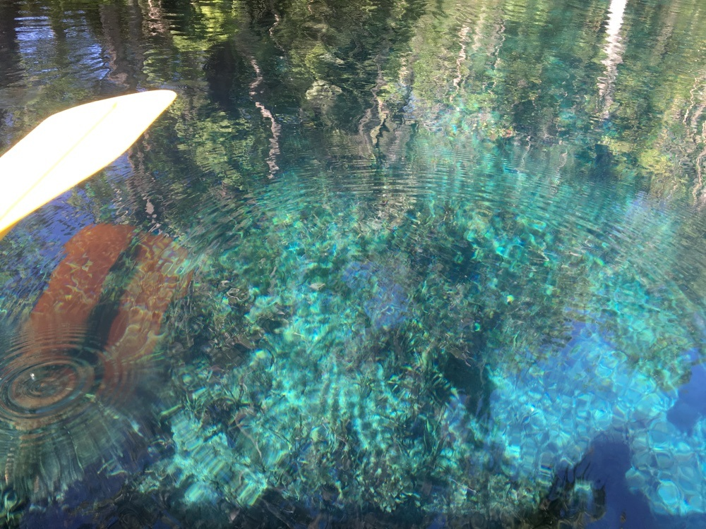 clear water at silver springs